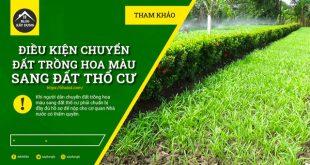 dieu-kien-chuyen-dat-trong-hoa-mau-sang-dat-tho-cu-nam-2021